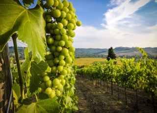 Georgia - Kakheti – The Land of Wine